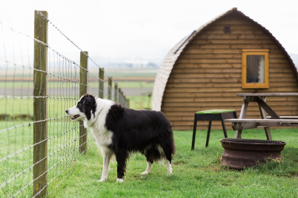 Dog-Friendly-Glamping-1024x682